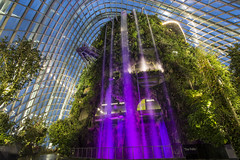 pink water (cih94) Tags: singapore garden city green nature plants gardens by bay project dome glass waterfall pink water artifical