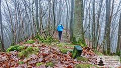 Wandern im Wald über der Strotzbüscher Mühle