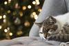 IMG_4133 (Damian Ciszewski) Tags: cat kitty meow purrfect sleepy macro fur whiskers