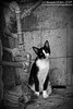 Cuban Street Cat 1 (sminky_pinky100 (In and Out)) Tags: cat streetcat blackandwhite portrait animal cute cuba havana travel tourism omot outside pipes backstreets