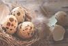 Ohh!!... se cayó el nido (amjs63) Tags: codorniz huevos macromondays nido plumas speckled