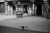 Leica_m_BW_63259_Pan400 (OPTIK AXIS) Tags: ライカ rf mp85 カメラ camera summiluxm 135 銀塩 写真 底片 膠卷 taiwan 台灣 ライカmレンズ 単焦点レンズ フィルム film analoguephotography 白黑 黑白 blackandwhite garylevel monochromatic blackandwhitefilm leica summiluxm11435asphe46 ilfordpan400