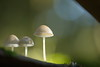 Oh, there is another one from last autumn! (Stefan Zwi.) Tags: forest wald pilze mushrooms light licht bokeh pilz mushroom macro sigma105mm ngc npc