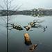 A beaver's handiwork - Lake Mälaren Stockholm Sweden