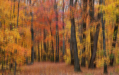 Into the Wood (lfeng1014) Tags: intothewood camerapanning panning autumncolours autumn forest artisticexpression colourful painting canon5dmarkiii 70200mmf28lisii landscape lifeng algonquin algonquinprovincialpark multipleexposure