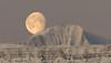Moon in the morning sky (*Jonina*) Tags: iceland ísland faskrudsfjordur fáskrúðsfjörður moon tunglið mountains fjöll morning morgunn winter vetur snow snjór jónínaguðrúnóskarsdóttir 500views 50faves