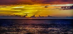 Hawaii-LonePalm-18.jpg (Chris Finch Photography) Tags: shoreline sunset kohala volcano chrisfinchphotography blacksandbeach ʻanaehoʻomalubay goldcoast landcapes landscape waikoloa sunsets pacificocean abay hawaiianphotography hawaii kohalacoast kiholobay landscapephotographs hawaiiphotography keawaikibay landscapephotographer beach ocean utahphotographer wwwchrisfinchphotographycom chrisfinch volcanoes shore lonepalm lone landscapephotography coast pacific bigisland