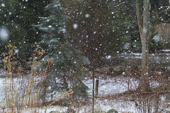 Big Flakes (brucetopher) Tags: snow snowing snowfall snowstorm storm snowflake snowflakes winter cold snowy wintry scene landscape forest woods yard clearing