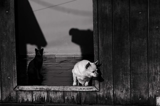 Foto- Arô Ribeiro -0987