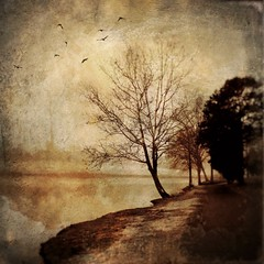 Lakeside trail. (jeanne.marie.) Tags: iphone7plus iphoneography lake foggy winter trail tree sycamore textured sepia