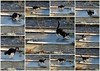 Crazy Felix :) (joeke pieters) Tags: 1380490499 panasonicdmcfz150 felix kat kater cat tomcat ijspret ijs ice collage