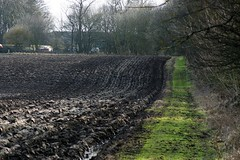 Mining subsidence (Rhubus) Tags: subsidence coal deep mining drop calculated farming field wet flood arable surveyed energy extraction ploughed trees uk northeast england northumberland