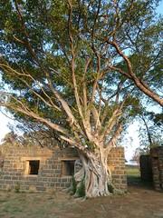 Nambiti Reserve, KwaZulu-Natal