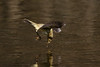 131.jpg (Kico Lopez) Tags: phylloscopuscollybita miño lugo spain galicia birds mosquiterocomún aves rio