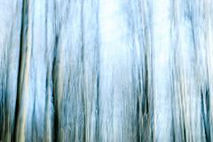 Blurred lines-2 (ianmiddleton1) Tags: trees pollokpark glasgow icm hss sliderssunday abstract art