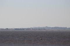 IMG_6923 (cindyincidentally) Tags: whitstable kent kentcoast britishbeach seaside seashore seasidetown