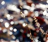 Bountiful bokeh and pond frond🍃 (kristie1elise) Tags: nature bokeh weeds pond sunny macro sonyrx10iv nofilter colors