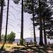 Redwood Picnic Spot, California