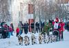 31 Aliy Zirkle (Traylor Photography) Tags: aliyzirkle dogsled iditarod alaska lastgreatrace 31 snow dogmushing anchorage unitedstates us
