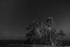 El árbol misterioso (ignaciofedz) Tags: estrellas eucalipto largaexposicion lastres ligthpainting mirador nocturna