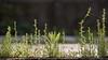 Tiny beautiful world (hironimir10) Tags: weed 雑草 川崎 武蔵中原 緑