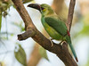 IMG_1108 Crimson-rumped Toucanet (suebmtl) Tags: bird birding ecuador pichinchaprovince santadeo crimsonrumpedtoucanet aulacorhynchushaematopygus