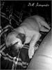 Dogs & Cats (DM Fotografie) Tags: dmfotografie dog dogs animals haustiere staffordshire mops pug pugbeagle pinscher dackel pinschermischling hunde rassen hunderassen schäferhund sheep tiere tierfotografie