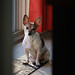 I know you're there (Boered) Tags: pokey dog sunlight