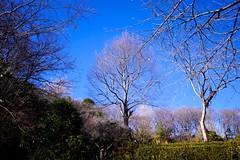 Winter Sky (tez-guitar) Tags: sky trees machida 町田 machida park winter pentax pentaxart wood forest