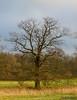 """Eichenbaum zwischen der """"Weißen Elster"""" und der """"Neuen Luppe"""" (joergpeterjunk) Tags: leipzig west outdoor lützschena pflanze baum eiche eichenbaum canoneos50d canonefs1785mmf456isusm"""