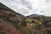 Depuis le Kiyomizu-dera (StephanExposE) Tags: japon japan asia asie stephanexpose kyoto kiyomizudera temple montagne arbre tree forest forêt mountain automne autumn canon 600d 1635mm 1635mmf28liiusm