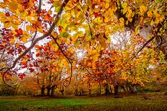 SARRIA STAR 1 (juan luis olaeta) Tags: autumn otoño udazkena otzarreta natura naturaleza landscape paisajes canoneos60d
