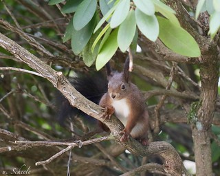 A squirrel looks me in the eye :-)