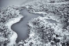 Mt. Hehuan Covered by Snow (JFLI0325) Tags: leica m10 21mm asph taiwan 南投縣 仁愛鄉 合歡山 superelmar 主峰 雪景 snow bw 黑白 霧淞