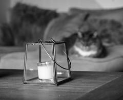 Sheldon - Happy Mono Catokeh Thursday! (Jo Evans1) Tags: mono bokeh thursday catokeh sheldon cat candle hmbt