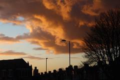 Sunset (daveandlyn1) Tags: trees streetlights sky bluesky rooftops chimneypots iii f3556 efs1855mm 1200d eos canon dusk