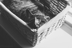 Cat sleeping in the sun (WillemijnB) Tags: 7dwf basket cat chat kat katze gato bw blackandwhite sun sunny windowsill window chill relax relaxing sleep sleeping nap catnap light tabby tabbycat kitty topview cute sleepy