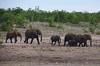 Eléphants Afrique du sud _4423 (ichauvel) Tags: éléphants animauxsauvages wildeanimals savane sedéplacer moving famille family troupeau afriquedusud southafrica mpumalanga voyage travel safari parckruger krugerpark janvier january nature trompes bébésbaby faune fauna mamipheres plusieurs