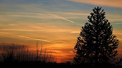 Dusk (tobystacey) Tags: sun dusk sunset naturephotography nature naturel natureshots naturebest photography photo horizon distance distant red yellow orange tree silhouette blue sky