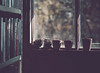 Sunny afternoon (V Photography and Art) Tags: window naturallight sunlight books pots pinecone flowerpot inside outside