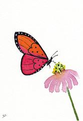 Red Butterfly (Sonia Aguiar (Mallorca)) Tags: butterfly watercolor watercolour acuarela aceo aquarell aquarelle atc palmademallorca wallart collectibles