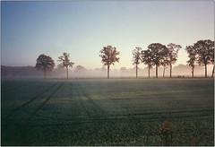 Morgenlicht III (Ulla M.) Tags: nebel fog bäume trees olympusxa selfdeveloped selbstentwickelt 35mm kleinbild reflectaproscan10t licht lichtstrahlen sonnenstrahlen umphotoart dorsten rangefinder analog analogue