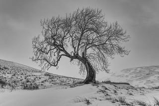 The Frandy Tree