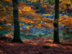 Hesede forest in fall (ibjfoto) Tags: skaevinge autumcolor autumn autumntrees danmark denmark efterårsfarver ibjensen ibjfoto natur skævinge zealand efterår landscape landskab natura outdoor trees