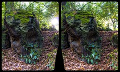 Eroded rock 3-D / CrossView / Stereoscopy / HDR / Raw (Stereotron) Tags: sachsenanhalt saxonyanhalt ostfalen harz mountains gebirge ostfalia hardt hart hercynia harzgau rock stone geology outdoor nature landscape tree woods forest europe germany deutschland crosseye crosseyed crossview xview cross eye pair freeview sidebyside sbs kreuzblick 3d 3dphoto 3dstereo 3rddimension spatial stereo stereo3d stereophoto stereophotography stereoscopic stereoscopy stereotron threedimensional stereoview stereophotomaker stereophotograph 3dpicture 3dglasses 3dimage twin canon eos 550d yongnuo radio transmitter remote control synchron kitlens 1855mm tonemapping hdr hdri raw