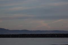 IMG_2802 (armadil) Tags: mavericks beach beaches californiabeaches scenic sunset