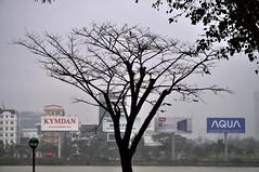 Trees in the rain (Roving I) Tags: trees silhouettes outlines monochromatic billboads rain weather hanriver streetlamps aqua danang vietnam