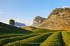 _J5K1441.0118.Chè Đài Loan.Tân Lập.Mộc Châu.Sơn La (hoanglongphoto) Tags: asia asian vietnam northvietnam northwestvietnam landscape scenery vietnamlandscape vietnamscenery vietnamscene sunny afternoon sunnyafternoon tree hillside tea teatree teahill sky bluessky hdr canon canoneos1dsmarkiii tâybắc sơnla mộcchâu chèđàiloan phongcảnh đồichè sườnđồi buổichiều nắng nắngchiều bầutrời bầutrờixanh phongcảnhmộcchâu đồichèmộcchâu sunlight tânlập canonef2470mmf28liiusm