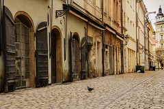 Prague and the pigeon (aksielza) Tags: prague street pigeon