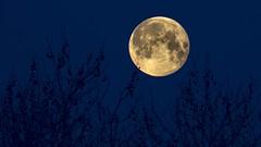 Blue Moon (Renate Bomm) Tags: 7dwf bluemoon ef200mmf28lusm landschaft mond natur renatebomm sonyilce6000 vollmond landscape moon blue blau